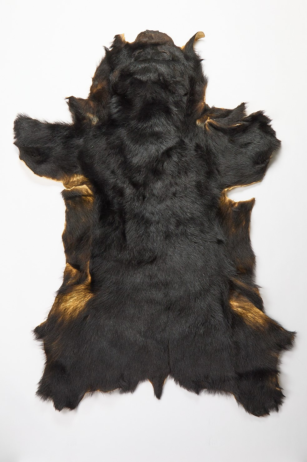 Genuine Bearskin Throw Rug (Without Claws)